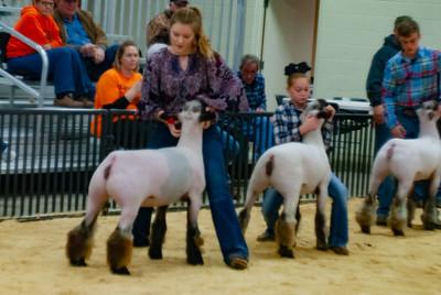 20190202_western_shootout_sheep021