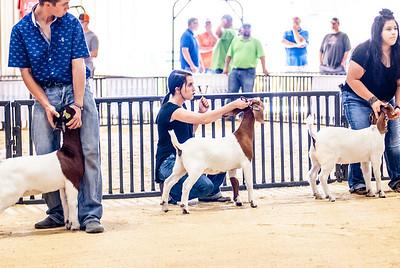 20180826_western_shootout_goats-1