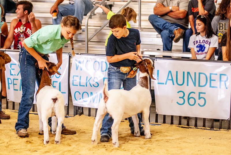 20180826_western_shootout_goats-22