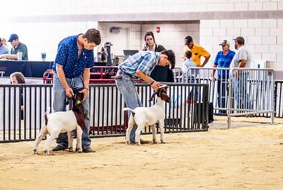 20180826_western_shootout_goats-10