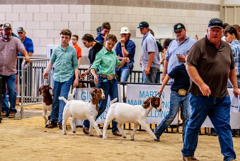 20180826_western_shootout_goats-17