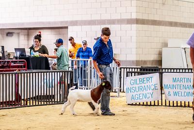 20180826_western_shootout_goats-5