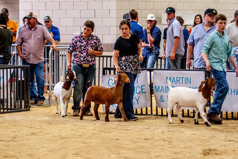 20180826_western_shootout_goats-18