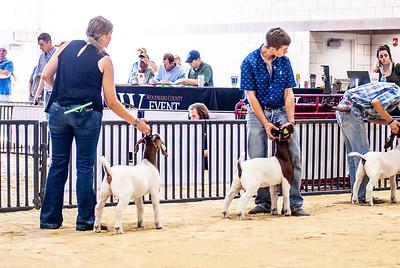 20180826_western_shootout_goats-9