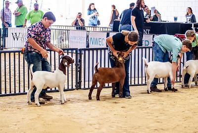 20180826_western_shootout_goats-24