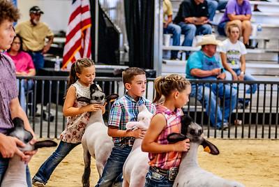 20180826_western_shootout_sheep-8