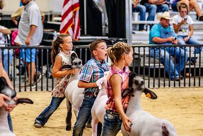 20180826_western_shootout_sheep-6