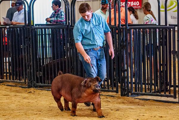 Great Western Shootout Swine
