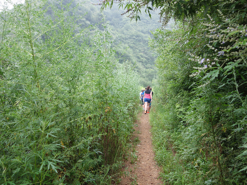 Great wall trekking