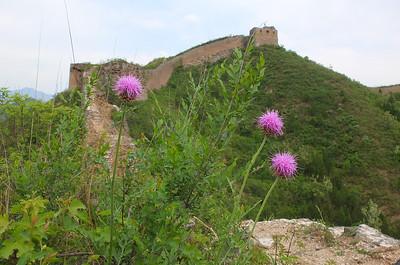 Gubeikou great wall hiking 【May】