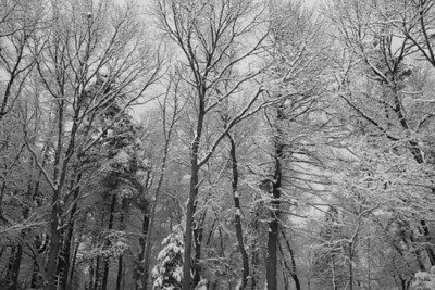 winter_trees_bw