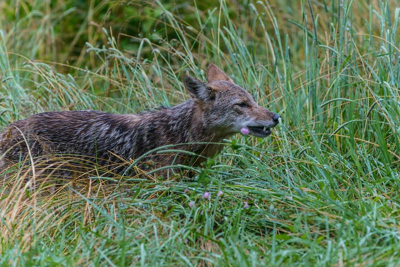 Preadator on the Prowl
