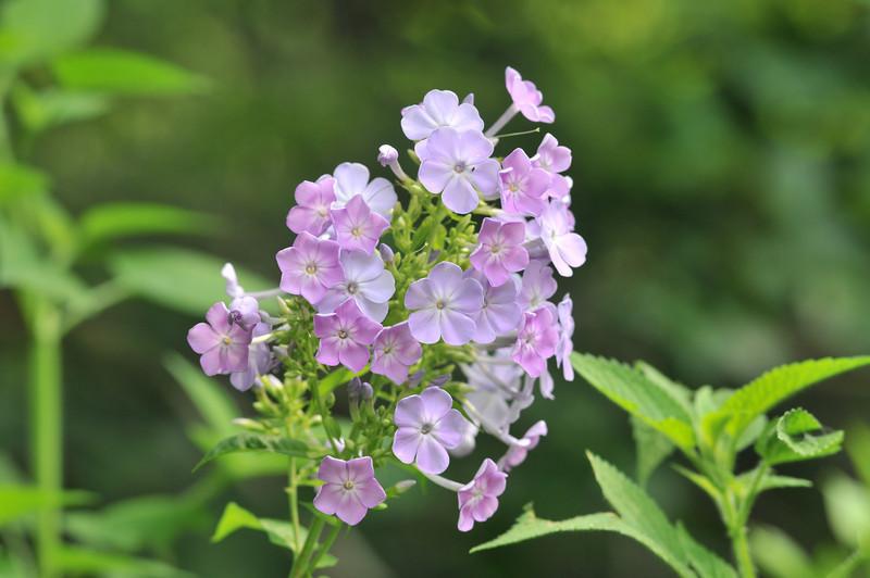 A mountain bouquet.