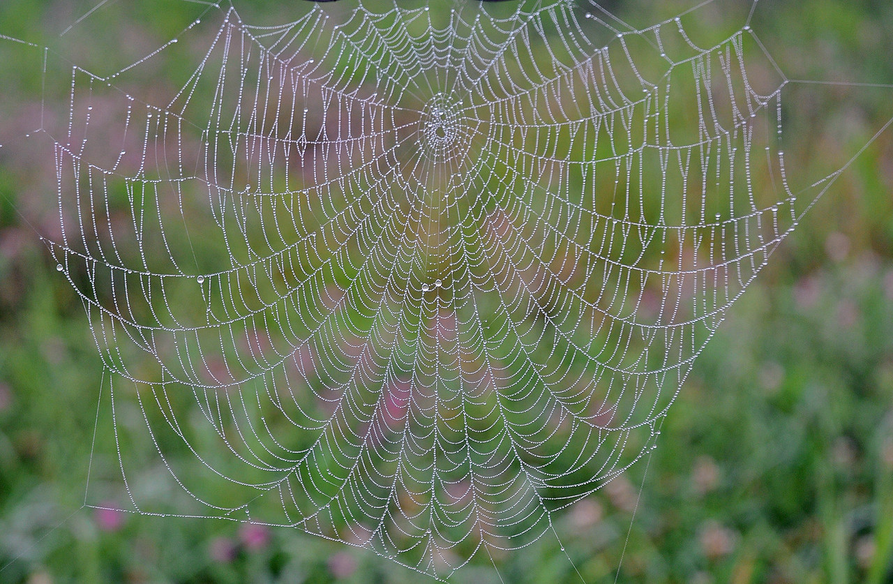 Spider web wet with morning dew.