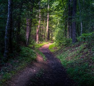 Following the Light