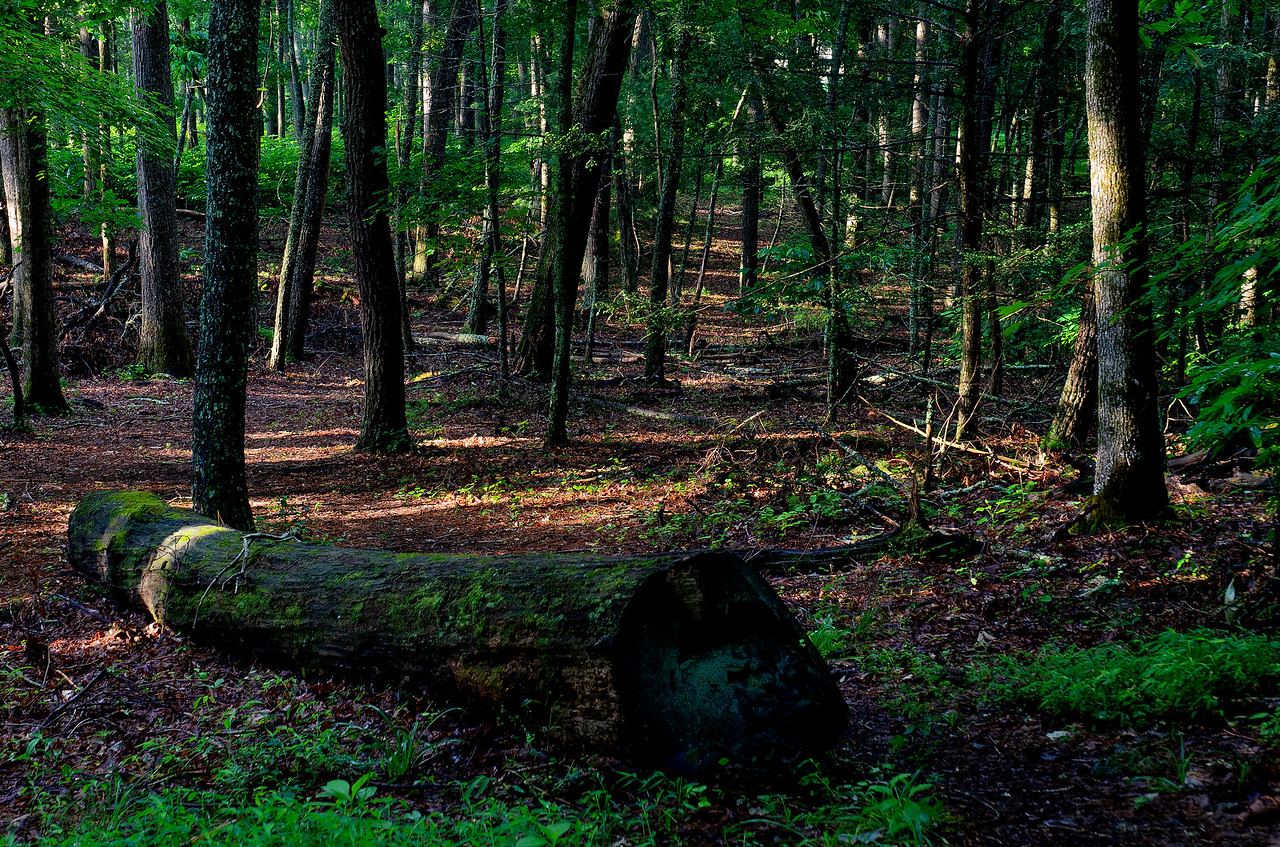 Filtered sunlight creates a trail through the forests of Smoky Mountain NP