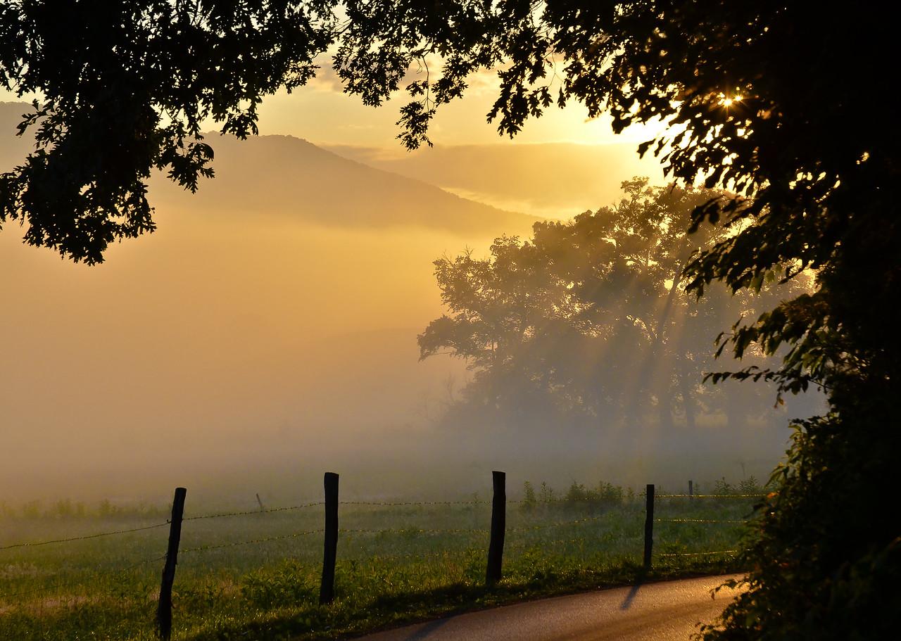 Golden Mists