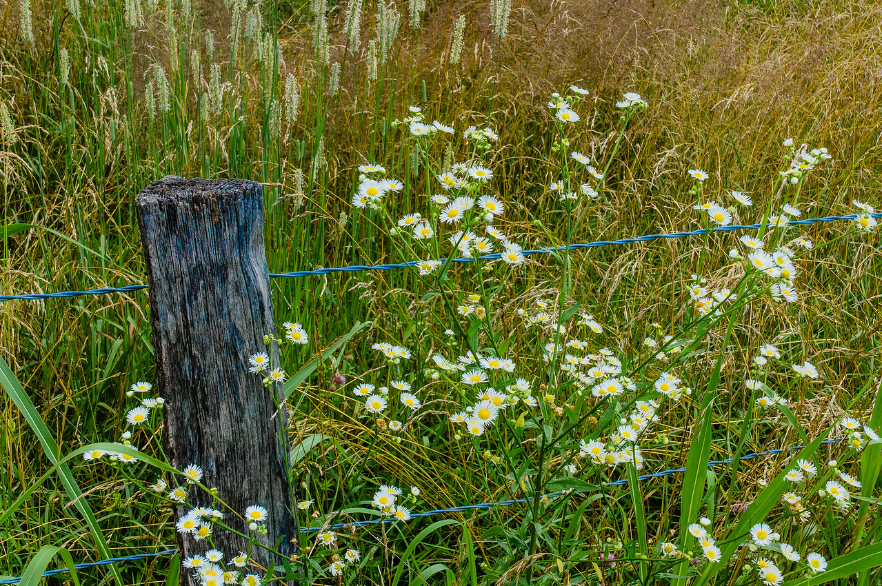 Wildflowers flourish in the meadow in late summer.