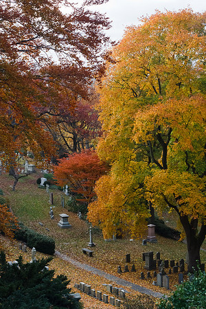 Several trees and graves in the Mount Auburn Cemetery.