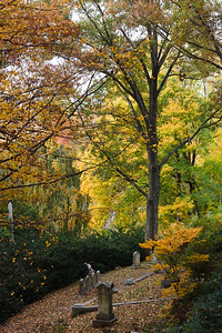 Various tombstones, surrounded by the fallen leaves of several types of trees, in the Mount Auburn Cemetery.
