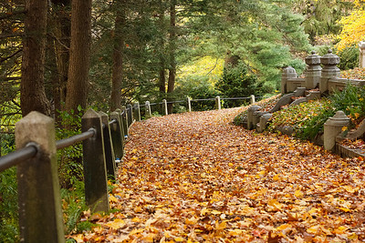 A path in Mount Auburn Cemetery, covered entirely by fallen leaves.