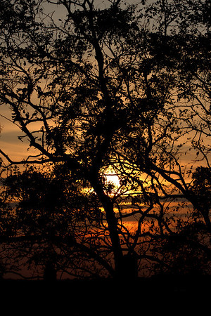 The silhouette of a tree against a red sunset, on Prospect Hill in Somerville, Massachusetts.
