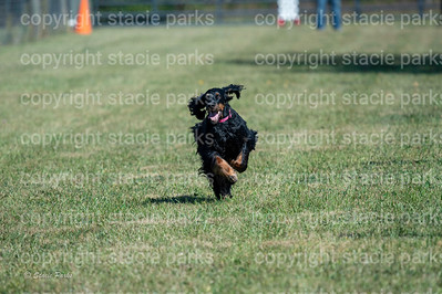 poodleclub (1023 of 2199)