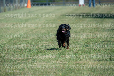 poodleclub (1022 of 2199)