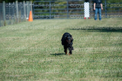 poodleclub (1018 of 2199)