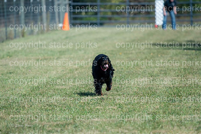 poodleclub (1134 of 2199)