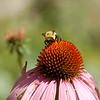 Untitled<br /> <br /> Captured at Cincinnati Nature Center, Rowe Woods