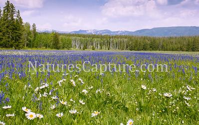 Teton NP near Teton Wilderness