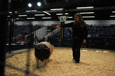 Dawn Franck, of Mifflinburg, shows off her pig during the Junior Market Swine Sale on Tuesday afternoon at the PA Farm Show in Harrisburg.
