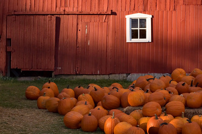 Detroit Area | Pumpkin Barn | Oakland County           fall