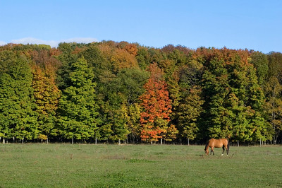 East Tawas | Grazing Horse | Iosco County            fall