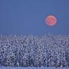 """Mondaufgang - Arvidsjaur, Lappland, Schweden<br /><br />  Moonrise - Arvidsjaur, Lapland, Sweden<br /><br /> - mehr dazu im Blog: <br /><a href=""""http://arnohelfer.wordpress.com/2013/01/06/winter-in-lappland/"""">Winter in Lappland</a><br />"""