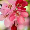 April 5, 2013. Blossoms.