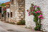 Purple oleander bushes bloom and decorate stone houses near Corinth, Greece.