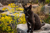 A black cat at the Tholos Temple ruins of the Sanctuary of Athena in Delphi, Greece.