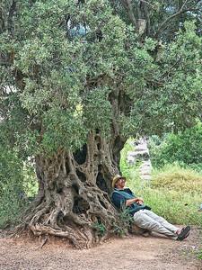 man-under-olive-tree