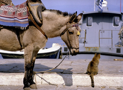 the donkey and the cat, Hydra