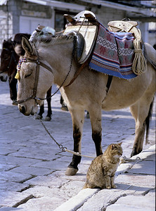 Hydra, the cat and the donkey, who is leading....