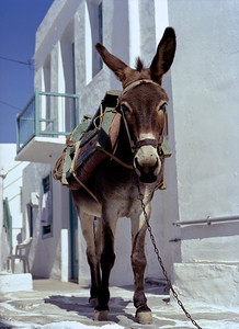 donkey, resting after a hard day's work, Sifnos