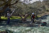 Olive oil production, Crete, December 2009 3.    Harvesting olives near Koupouli.