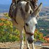 Donkey_IMG_7493