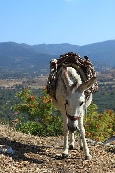 Donkey_IMG_7491