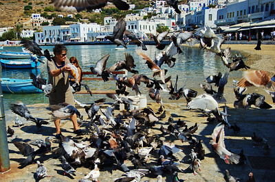 This woman started feeding the pigeons and it was a stampeed.