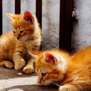 Lefkes - Kittens