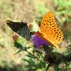 Parga Butterflies