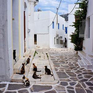 Paros - Cats